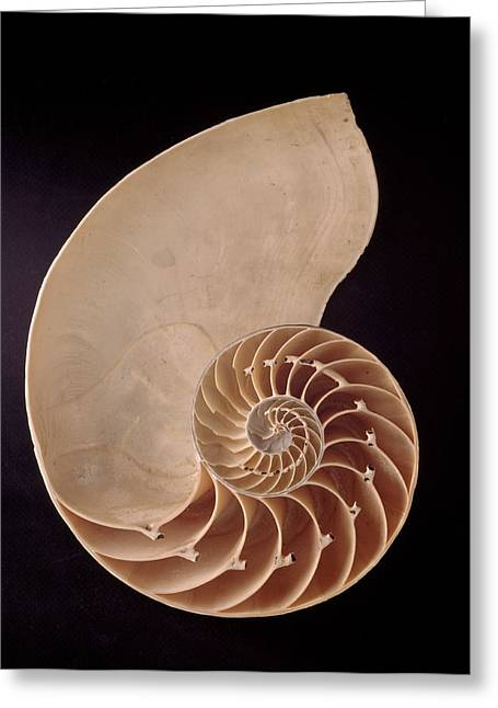 Common Nautilus Greeting Card by Natural History Museum, London