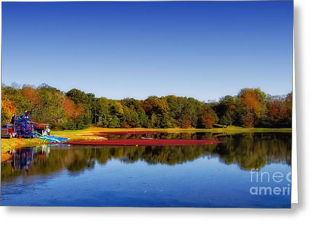 Greeting Card featuring the photograph Cranberry Farming by Gina Cormier