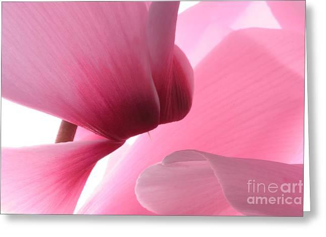 Cyclamen Greeting Card by Rebeka Dove