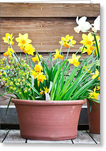 Daffodils Greeting Card by Tom Gowanlock