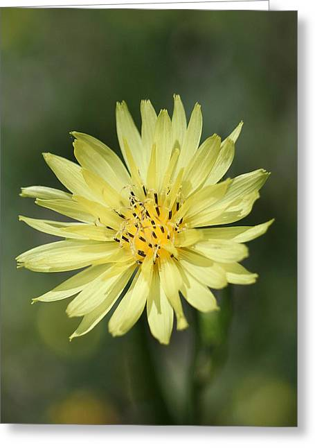 Dandelion Greeting Card by Ester  Rogers