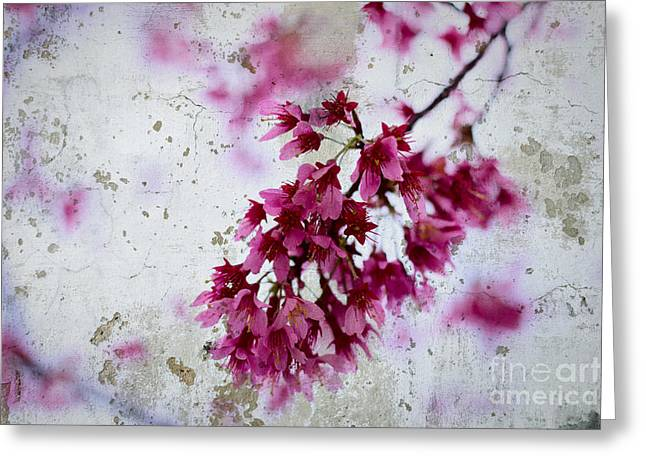 Deep Pink Flowers With Grey Concrete Texture Background Greeting Card