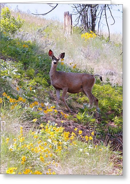 Deer In Wildflowers Greeting Card by Athena Mckinzie