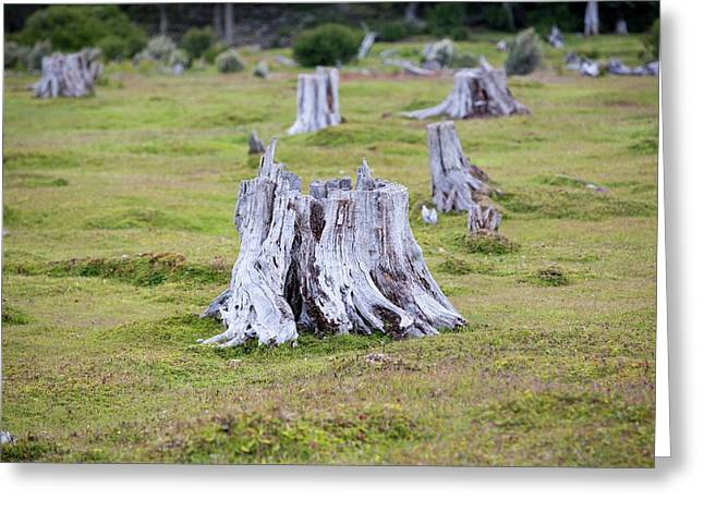Deforestation In The Martial Mountains Greeting Card