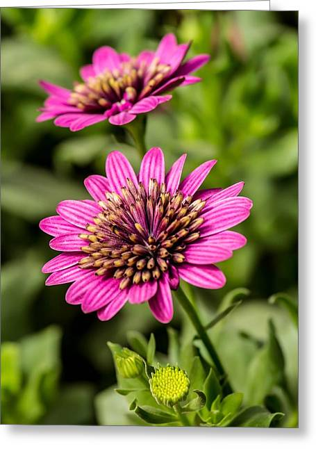 Desert Flower Greeting Card by Pete Mecozzi