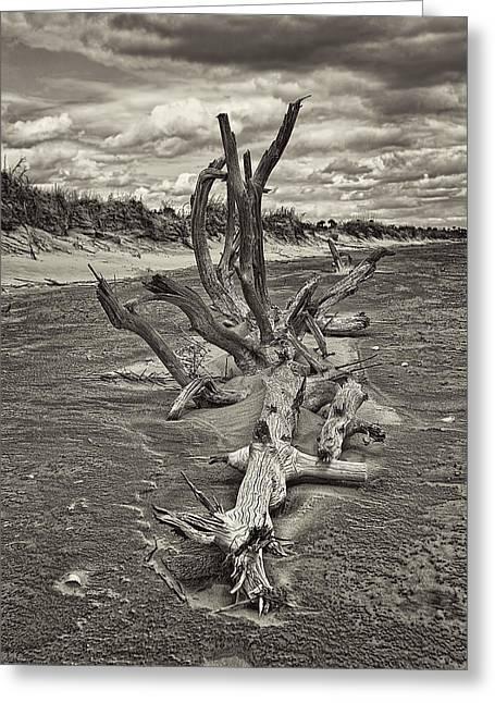 Desolate Greeting Card by Marcia Colelli