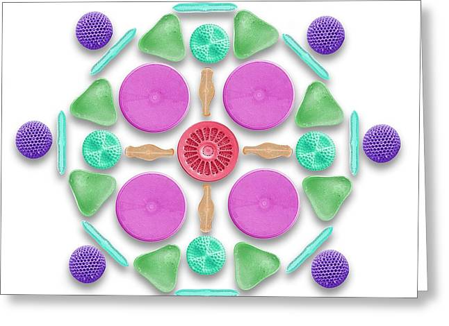 Diatoms And Radiolaria Greeting Card