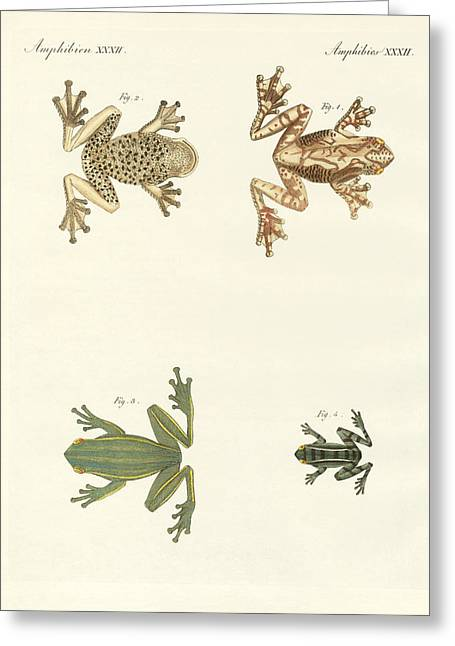 Different Kinds Of Foreign Tree Frogs Greeting Card by Splendid Art Prints