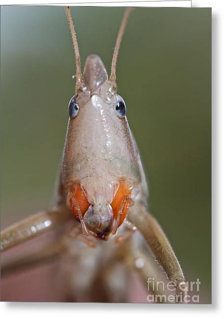 Do I Bug You Greeting Card by Gary Bridger