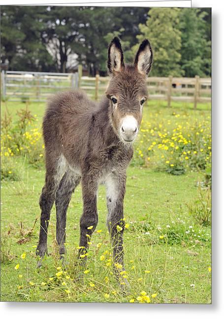 Donkey Baby Greeting Card