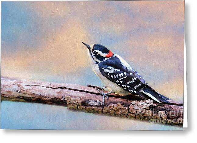 Downy Woodpecker Greeting Card by Darren Fisher