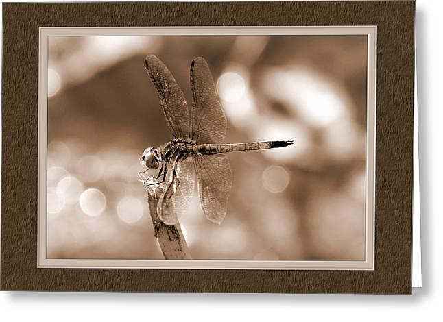 Dragonfly Elegance Greeting Card