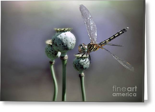Greeting Card featuring the photograph Dragonfly by Savannah Gibbs