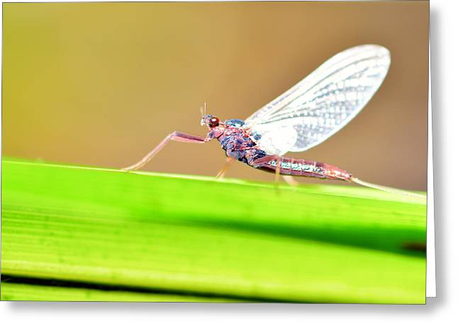 Dragonfly Greeting Card by Tommytechno Sweden