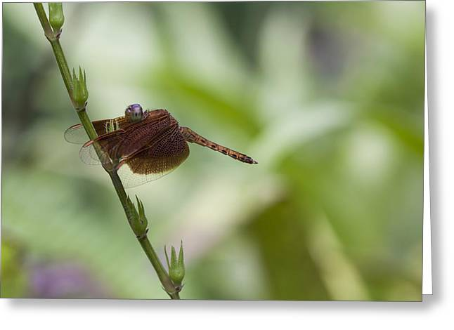 Greeting Card featuring the photograph Dragonfly by Zoe Ferrie