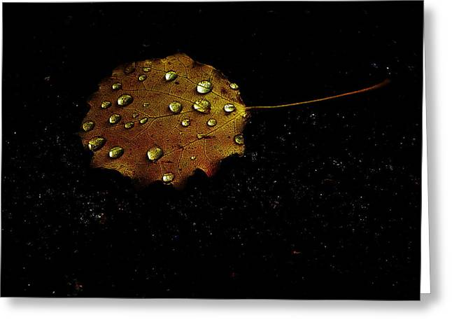 Drops On Autumn Leaf Greeting Card