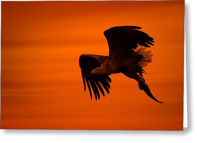 Eagle Silhouette Greeting Card by Andy Astbury