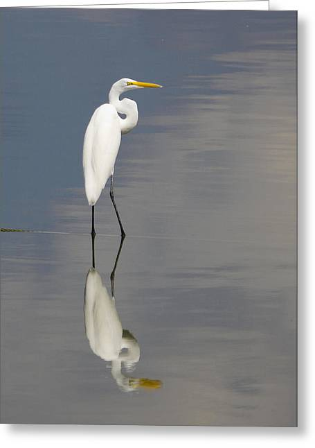 Egret Standing Greeting Card