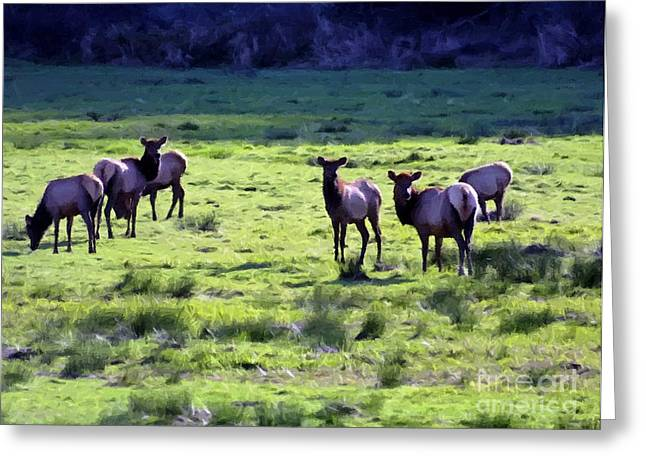 Elk Or Wapiti Greeting Card by Larry Stolle