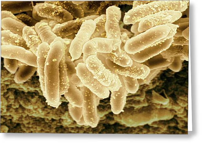 Erwinia Bacteria Greeting Card