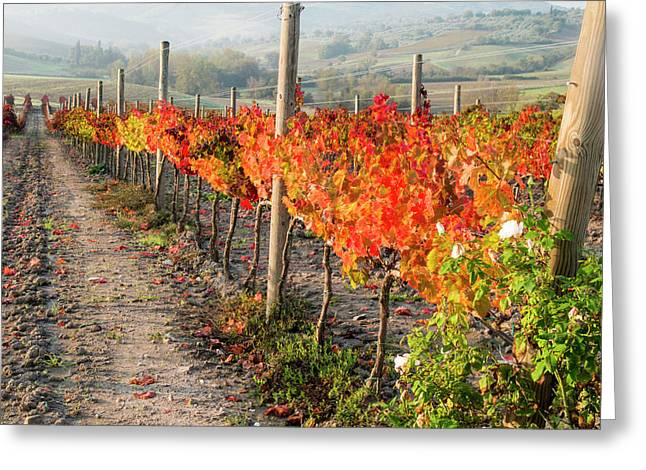 Europe, Italy, Tuscany Greeting Card by Julie Eggers
