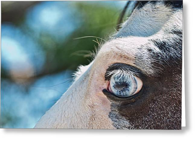 Eye Of The Beholder Greeting Card by Frank Feliciano