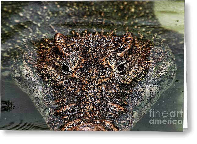 Eyes Of A Killer Greeting Card by John Rizzuto
