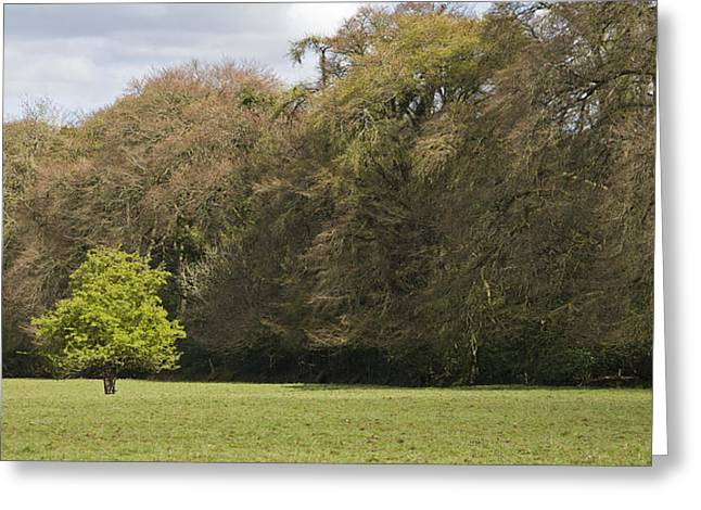 Greeting Card featuring the photograph Fairy Tree In Ireland by Ian Middleton
