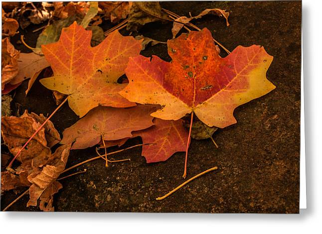 West Fork Fallen Leaves Greeting Card