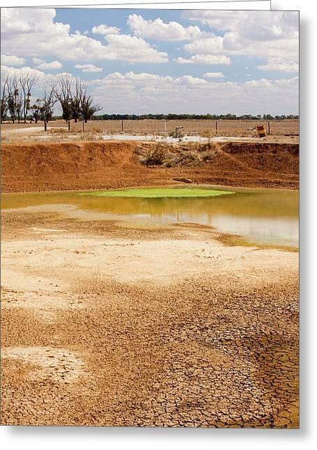 Farmer's Watering Hole Greeting Card