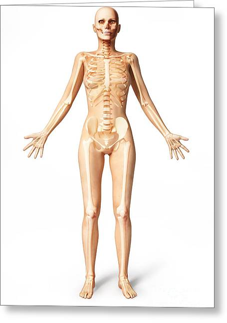 Female Standing, With Skeletal Bones Greeting Card by Leonello Calvetti