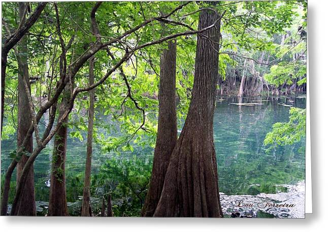 Florida Springs Greeting Card by Louis Ferreira