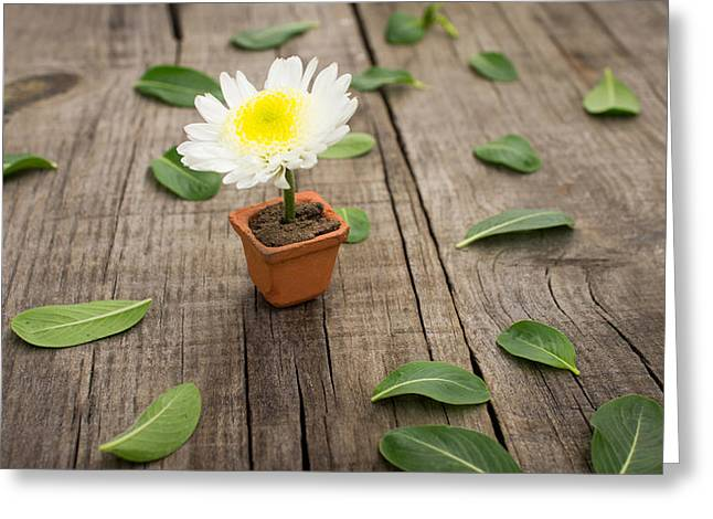 Flower Pot Greeting Card by Aged Pixel