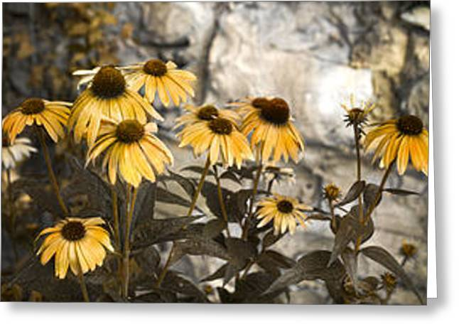 Flowers Greeting Card by Betsy Knapp