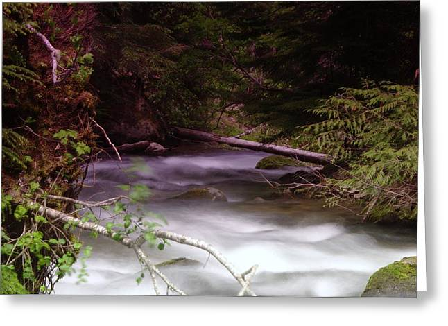 Flowing Through The Forest Greeting Card by Jeff Swan