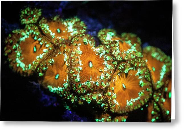 Fluorescent Coral Greeting Card