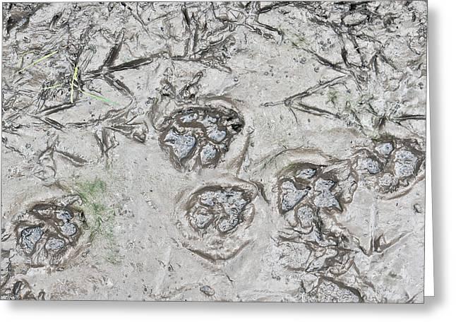 Footprints Greeting Card by Tom Gowanlock