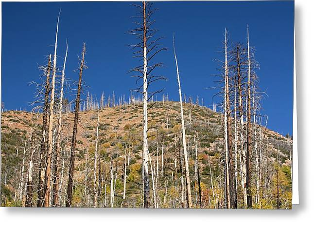 Forest Destroyed By Wild Fires Greeting Card