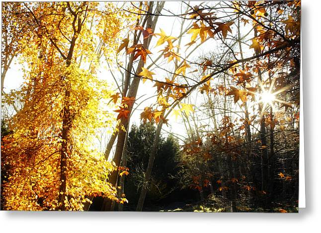 Forest Sunlight Greeting Card by Les Cunliffe