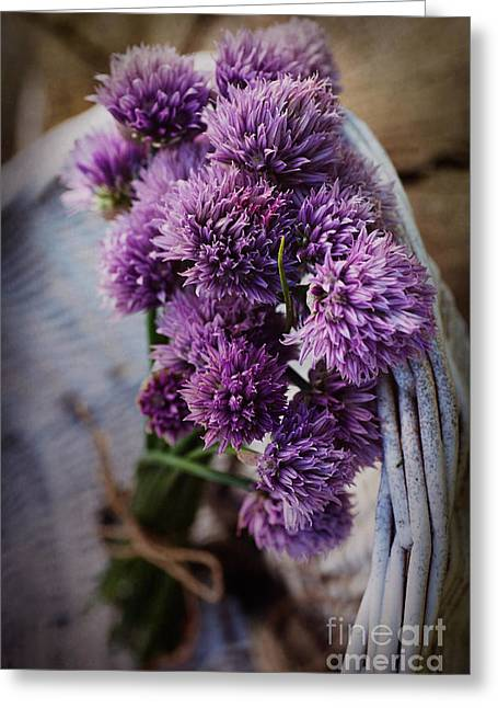 Fresh Chives Flower Greeting Card by Mythja  Photography