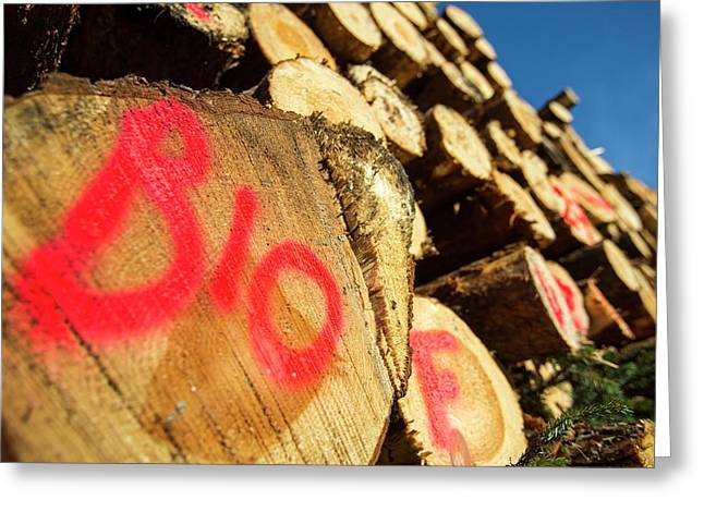 Freshly Cut Timber Greeting Card by Ashley Cooper