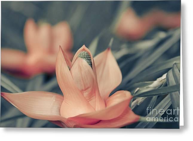 Freycinetia Multiflora - Climbing Pandanus Greeting Card by Sharon Mau