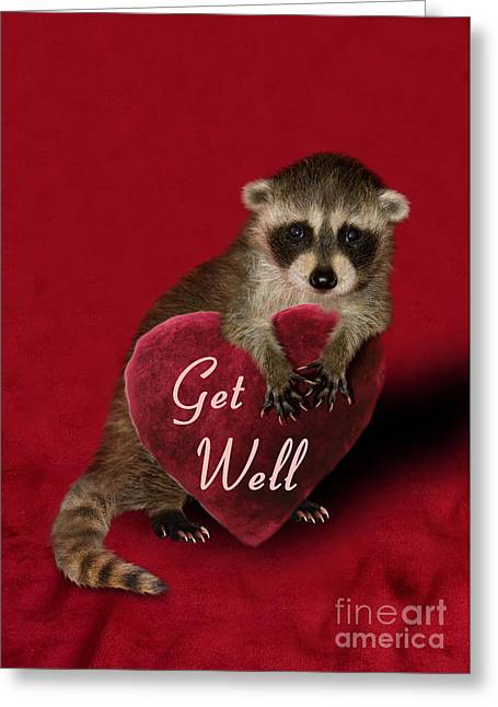 Get Well Raccoon Greeting Card by Jeanette K