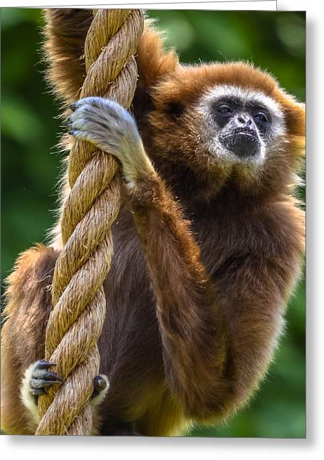 Gibbon Greeting Card