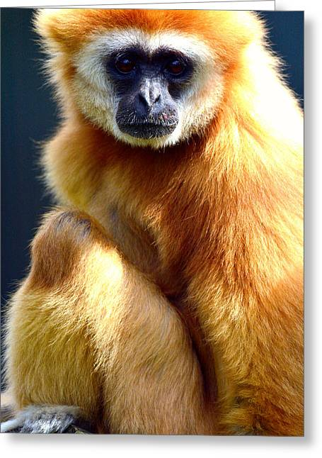 Gibbon Monkey  Greeting Card by Tommytechno Sweden