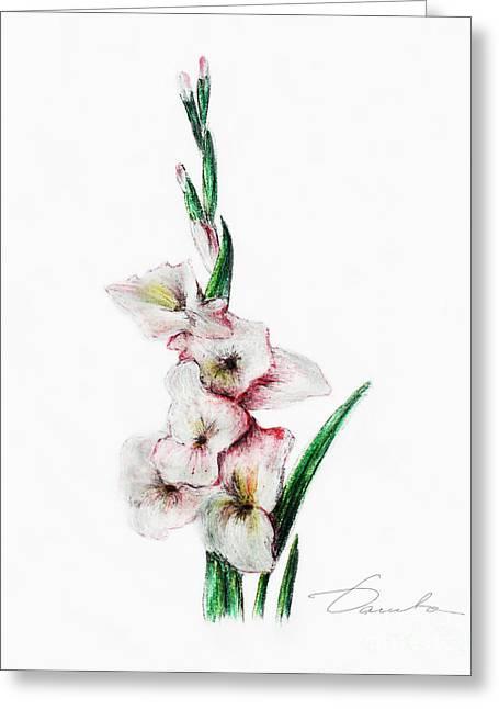 Gladiolus Greeting Card by Danuta Bennett