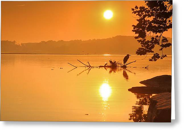 Golden Morning Greeting Card by Steven Ainsworth