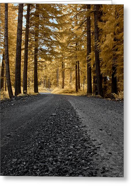 Golden Pines Greeting Card by David Stine
