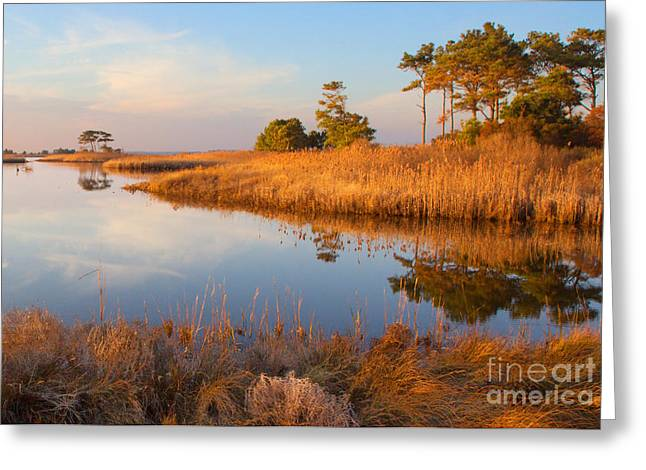 Gordons Pond Greeting Card by Robert Pilkington