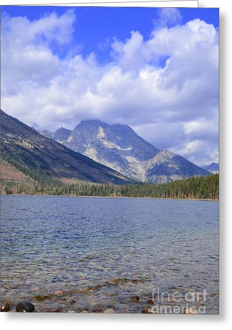 Grand Teton National Park Greeting Card by Kathleen Struckle